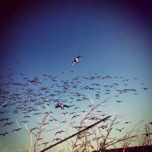 Best Time of Year for Texas Waterfowl Hunting