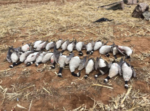 West Texas Waterfowl Hunt