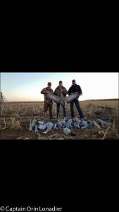 West Texas sandhill crane hunts