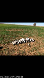 Amarillo, Texas goose hunts