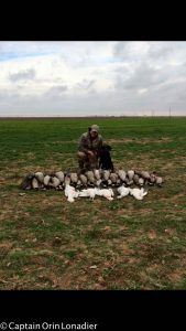 Lubbock, Texas goose hunts
